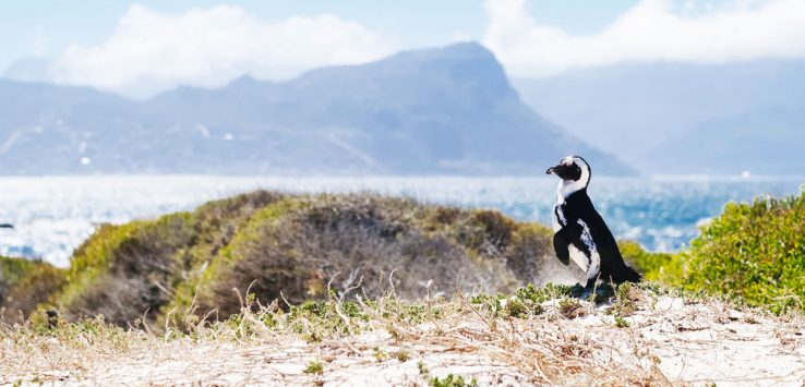 Backyard Bleisure: Explore More of SA